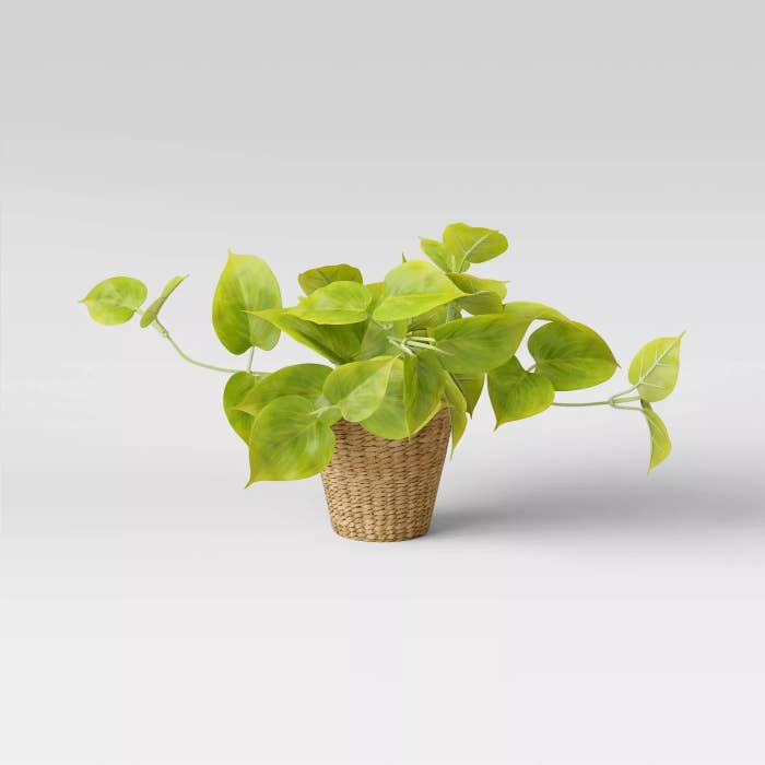 The pothos in a basket planter