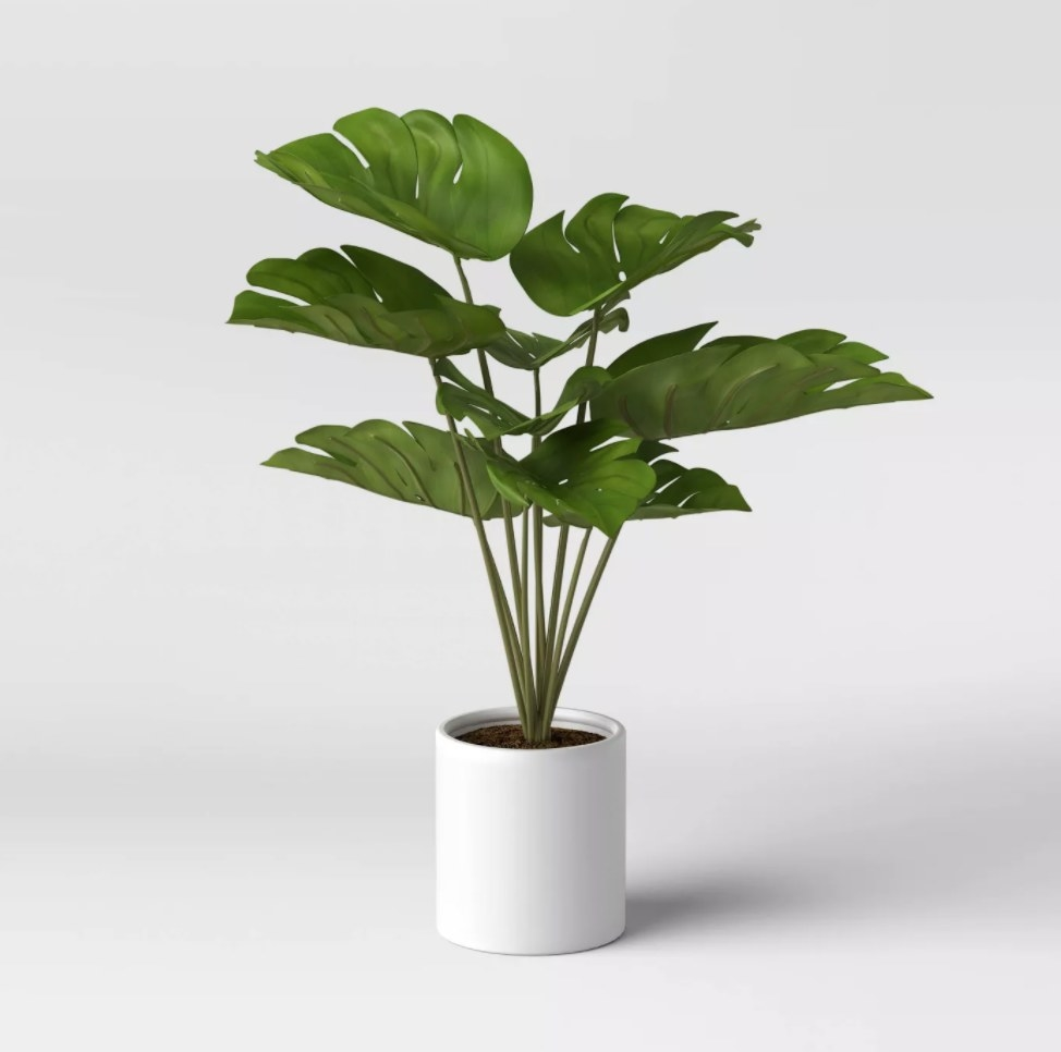 The green plant in a white ceramic pot