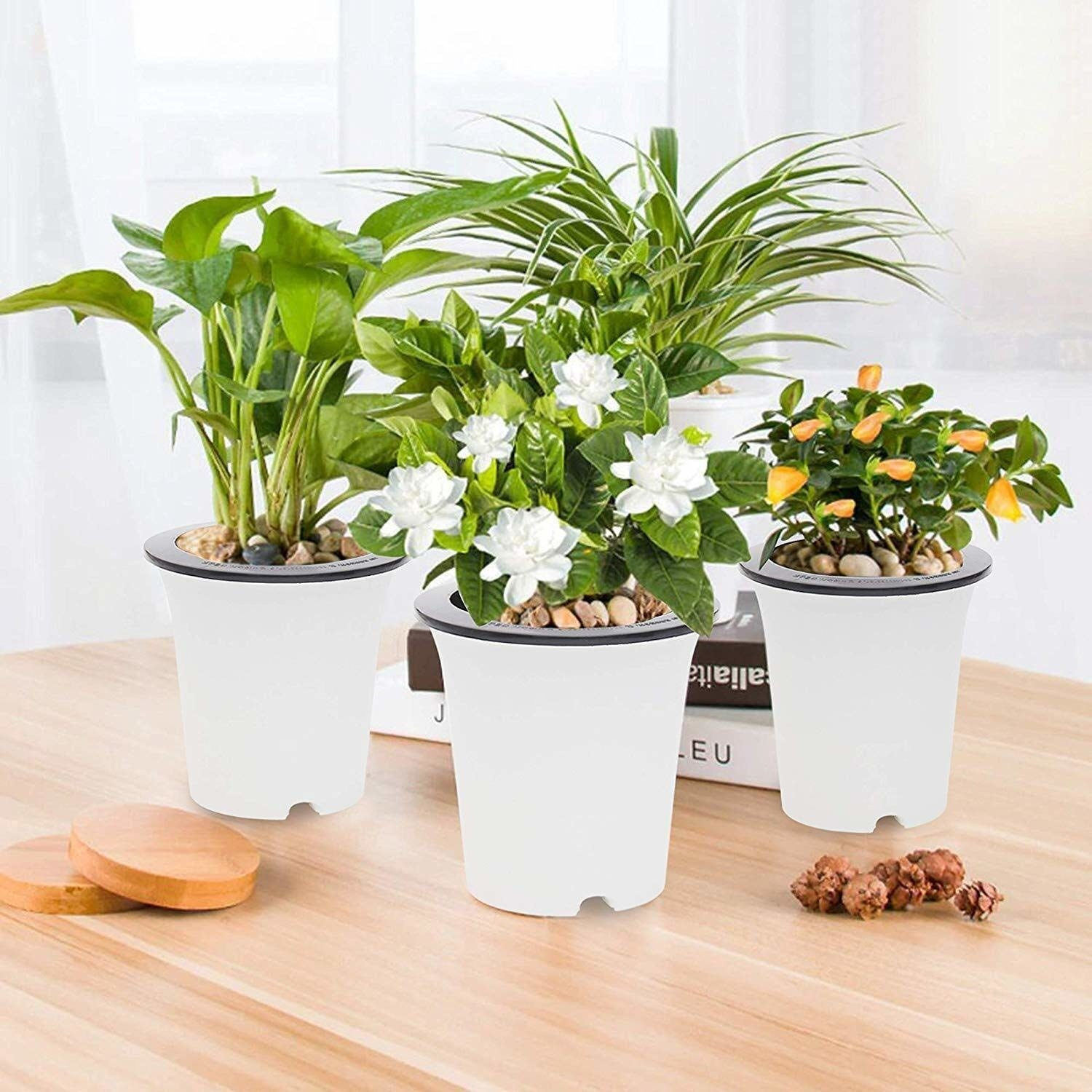 Four self-watering pots with plants in them