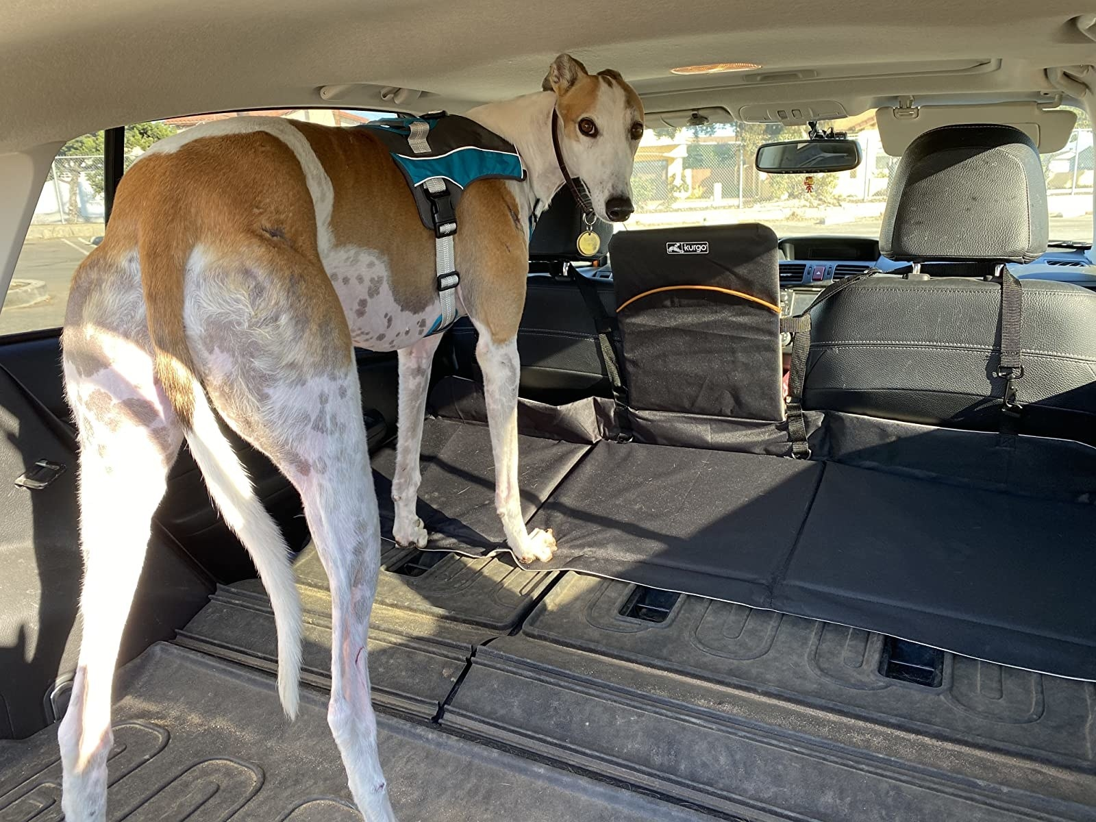 reviewer photo showing their large dog in the backseat of their vehicle, fitting only thanks to the car seat extender