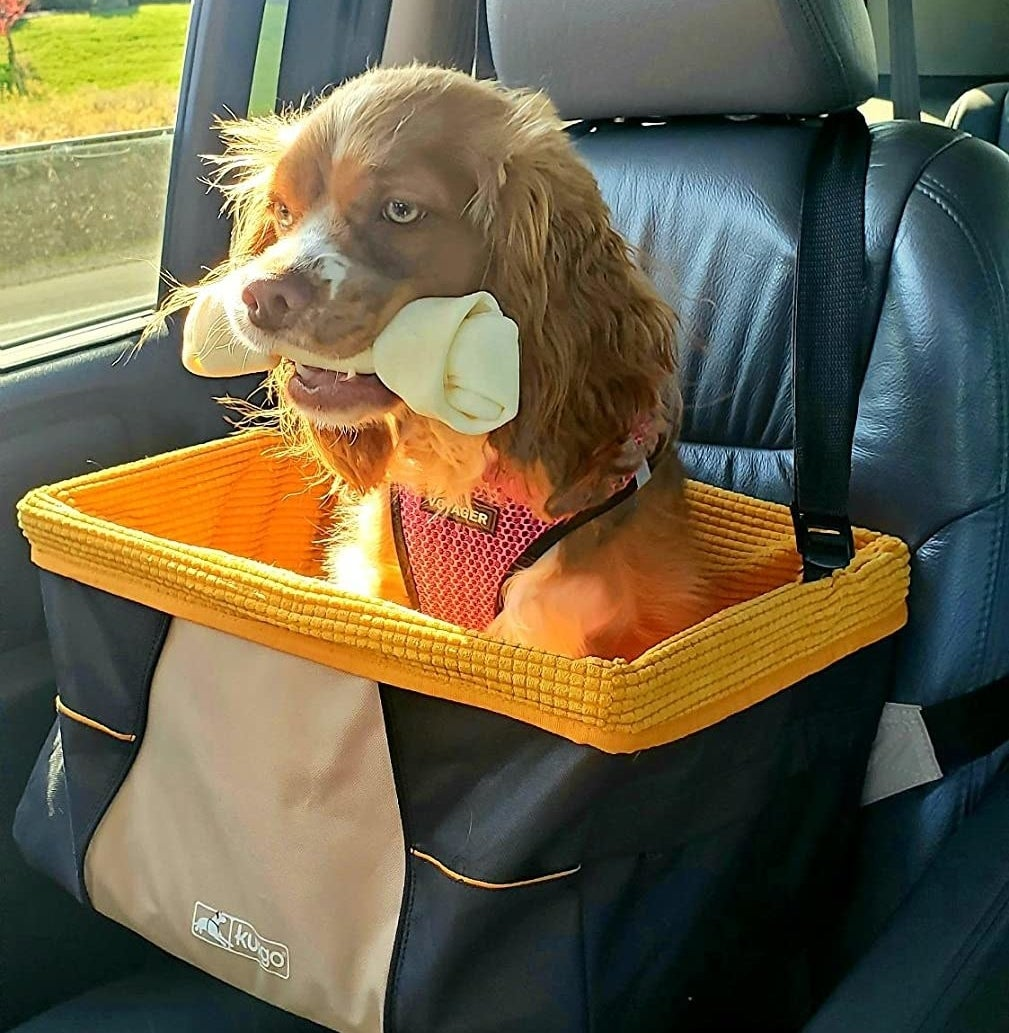 reviewer photo showing their puppy sitting in the car basket