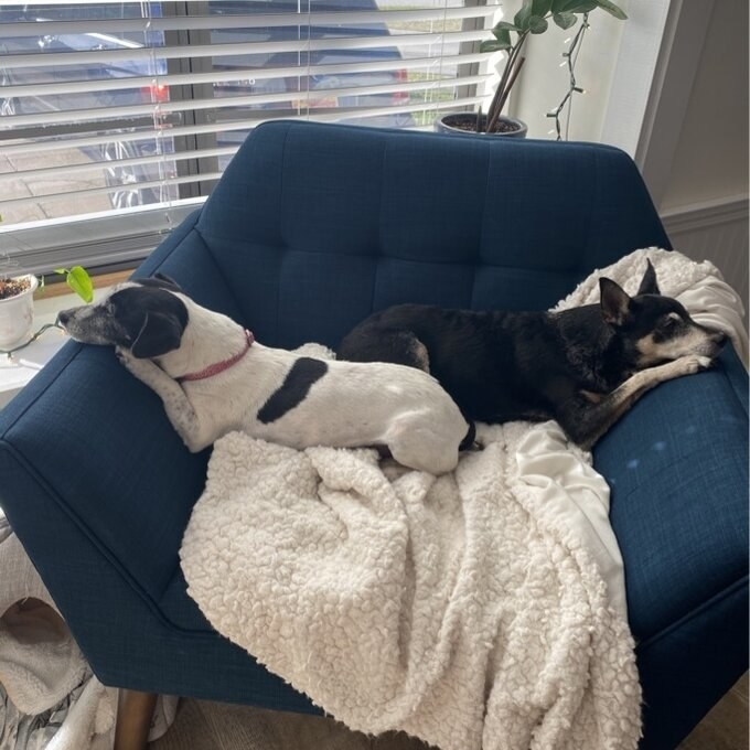 Review photo of the blue chair