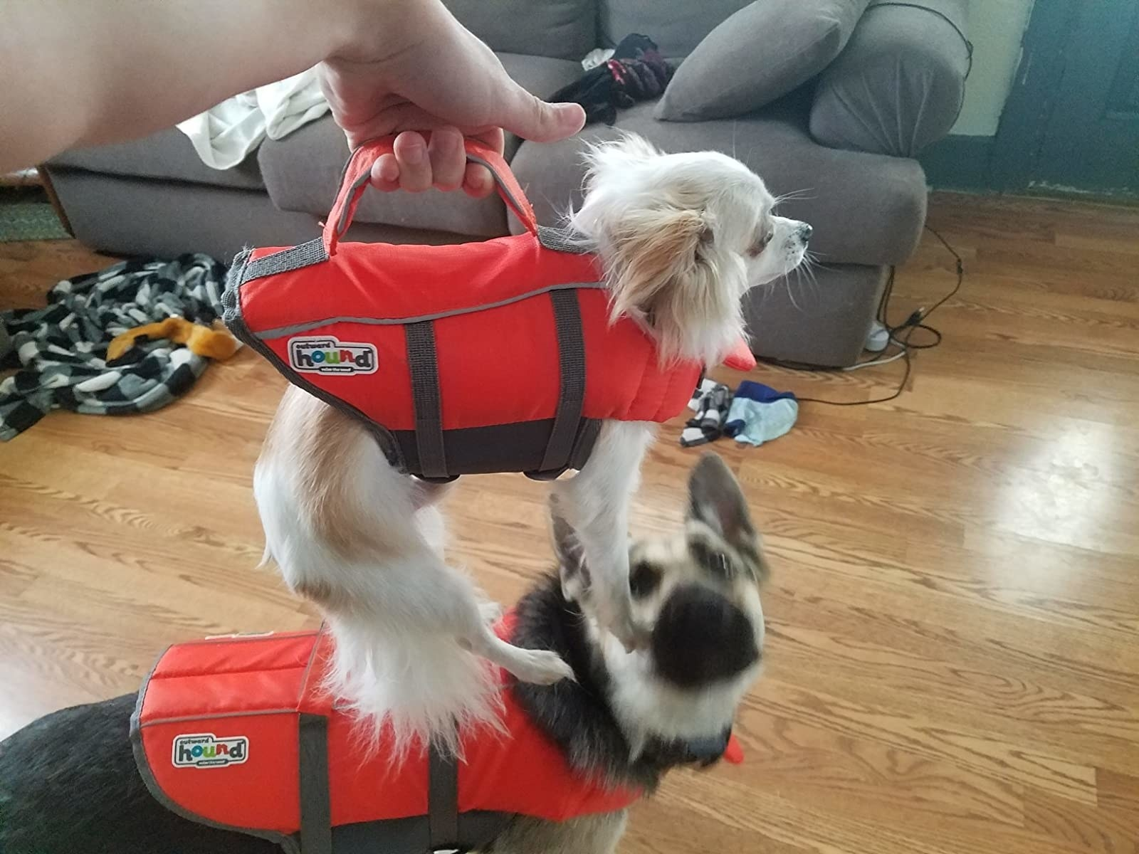reviewer photo showing their dogs wearing the life jacket