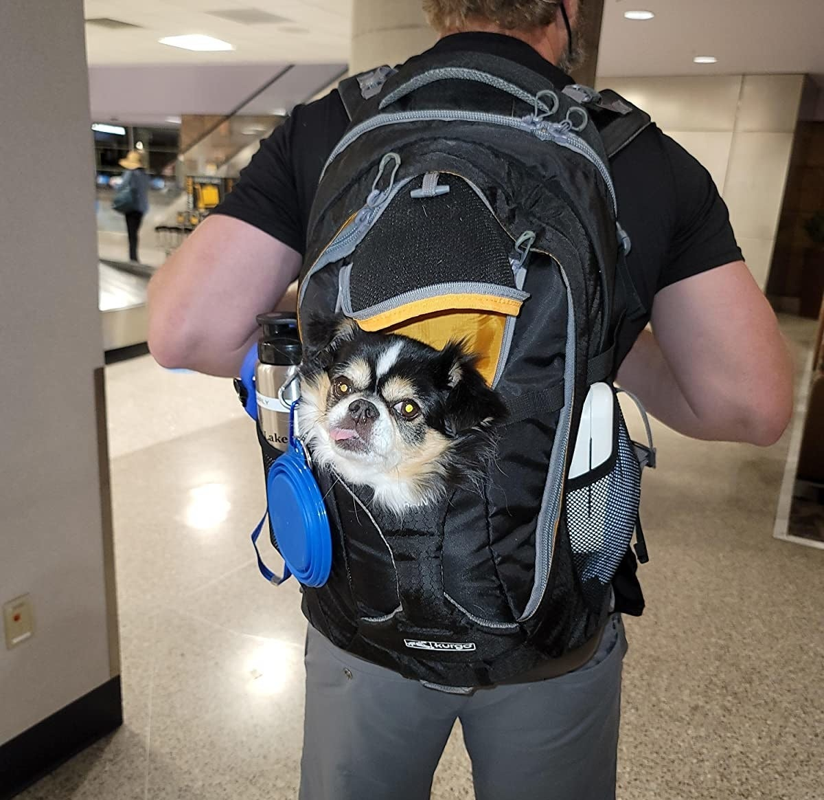 reviewer photo showing their dog's face sticking out of the carrier backpack