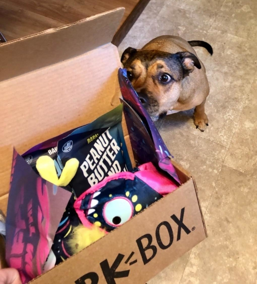 reviewer photo showing their dog smelling the Bark Box