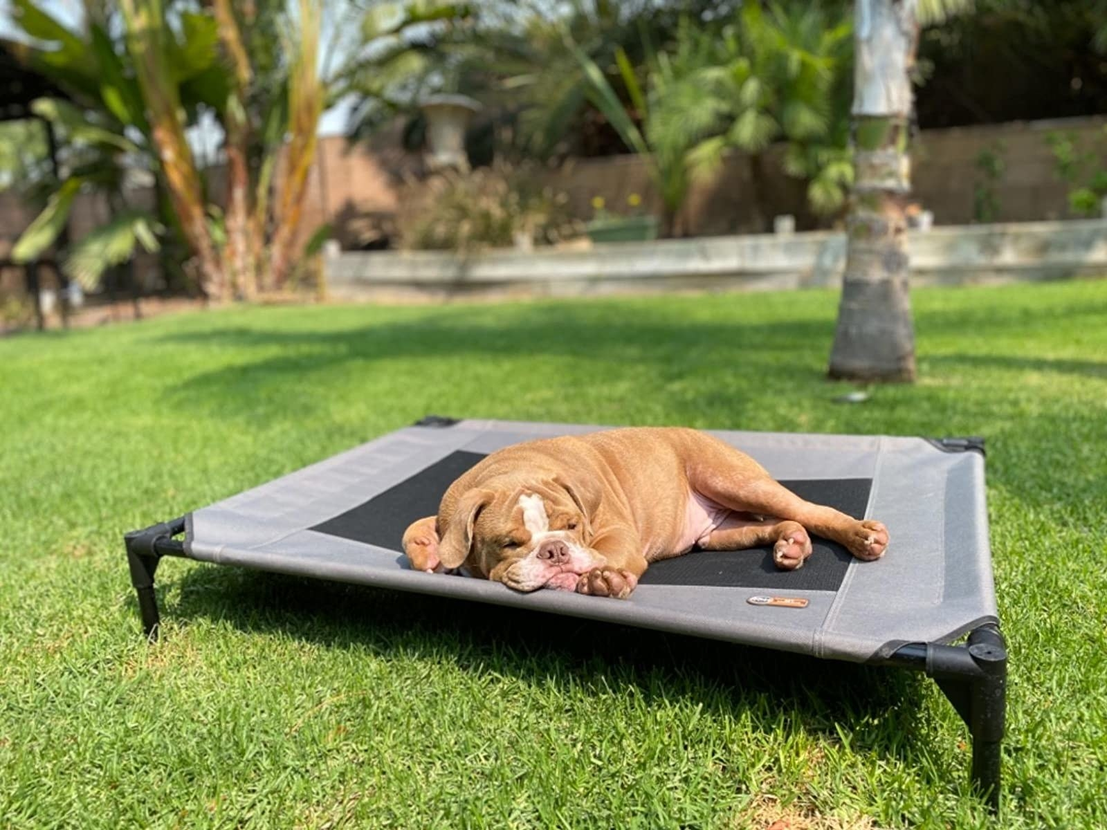 reviewer photo showing their dog laying on the elevated pet bed