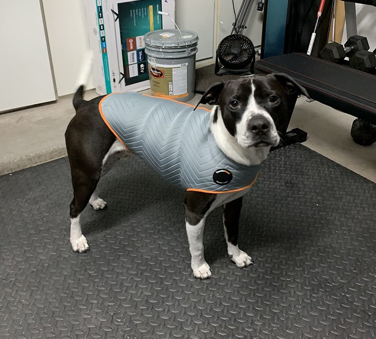 reviewer photo showing their dog wearing the anxiety jacket