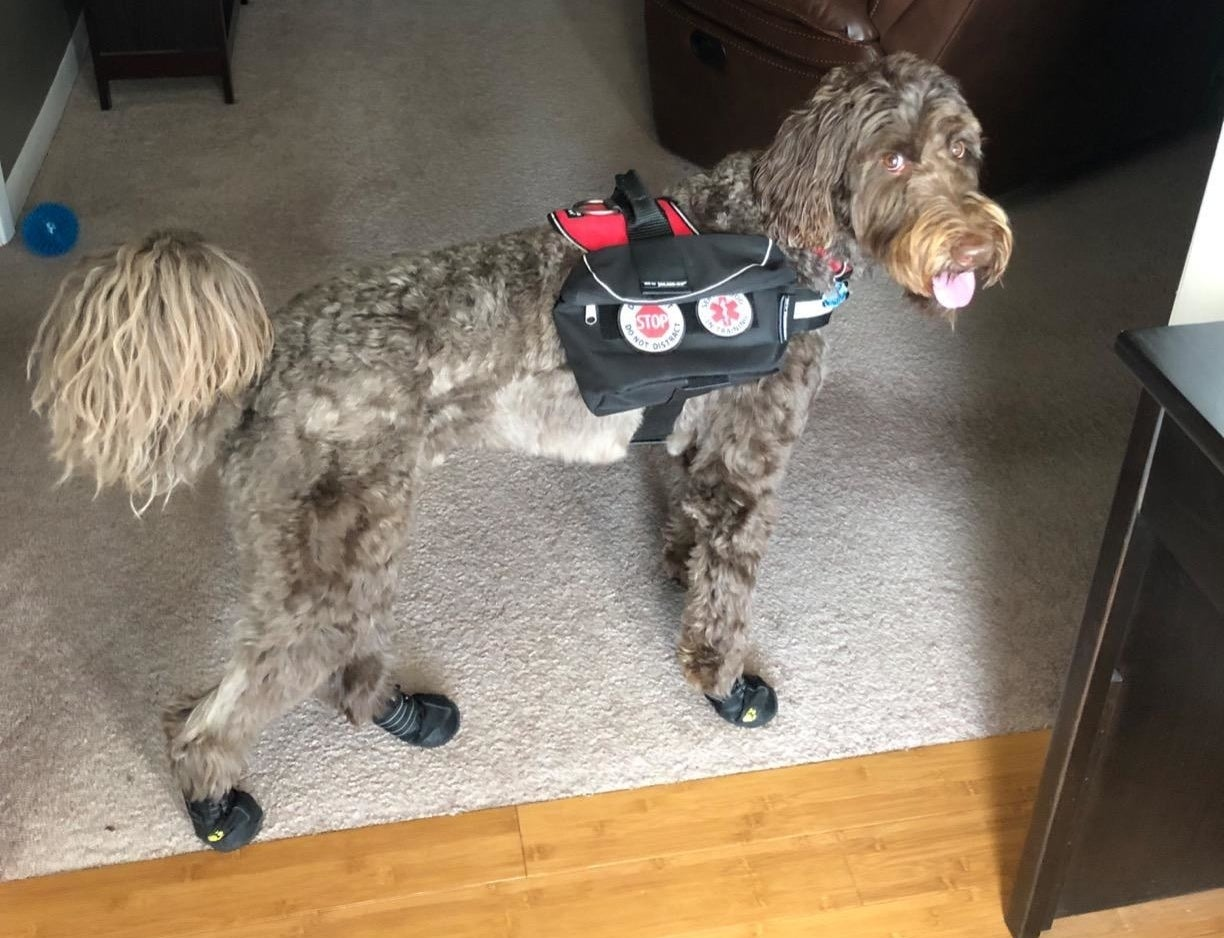 reviewer photo showing their dog wearing the waterproof booties indoors