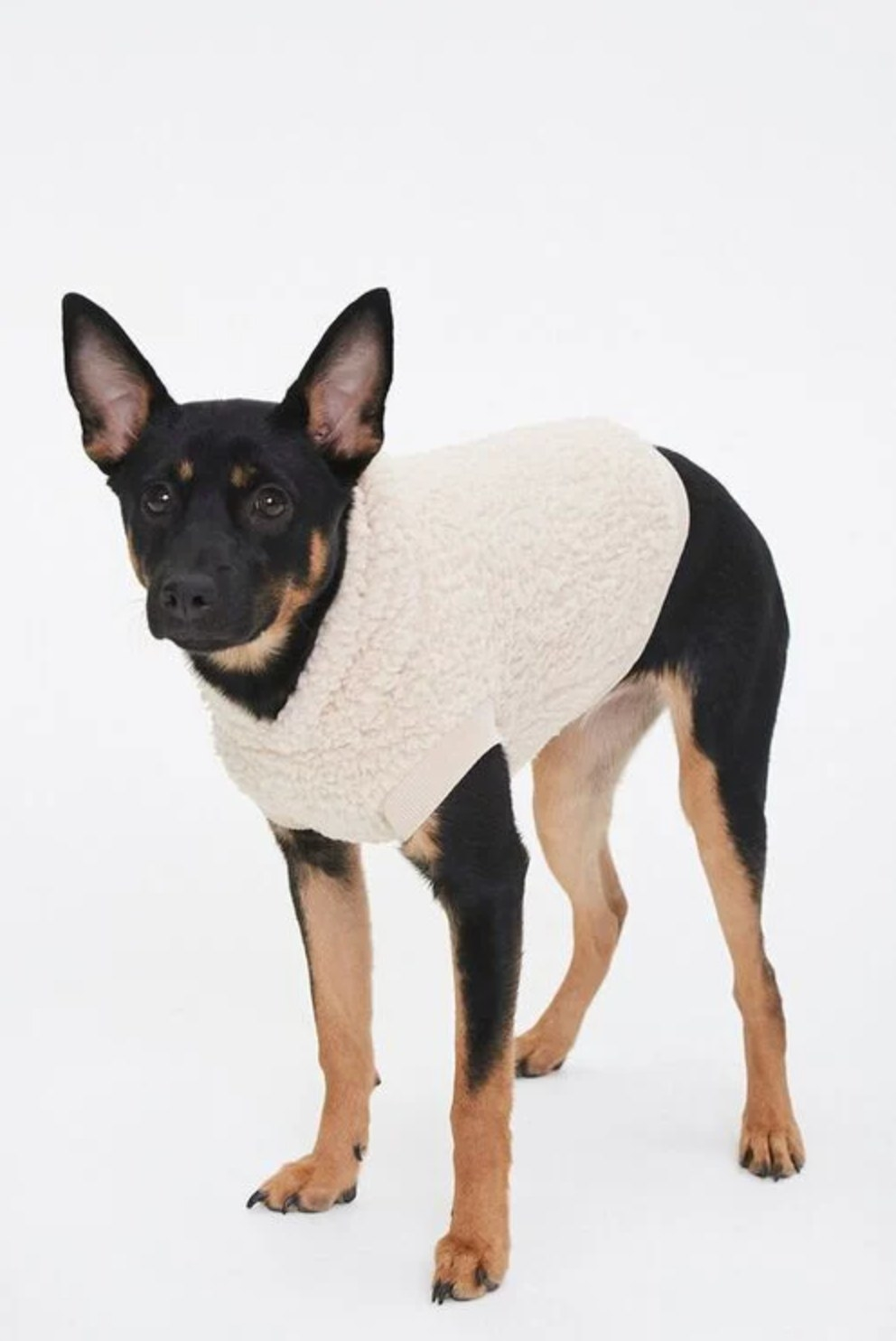 A dog wearing the sweater in taupe