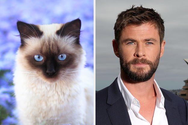 I Apologize In Advance For How Difficult This Will Be, But It's Time To Choose Between Hot Guys And Kittens