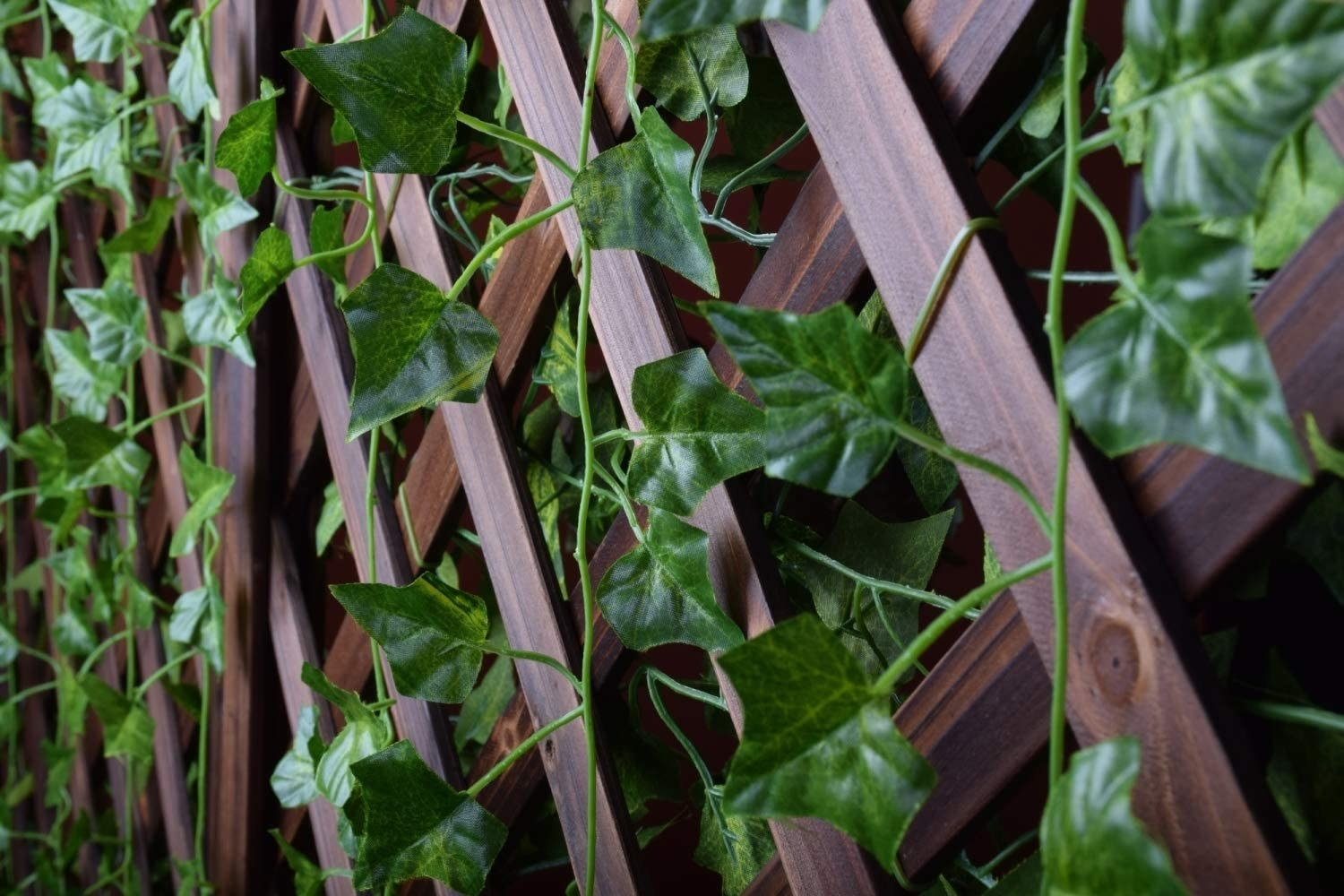 the ivy garlands in a fence