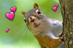 A squirrel poking its head around a tree with emoji hearts surrounding it