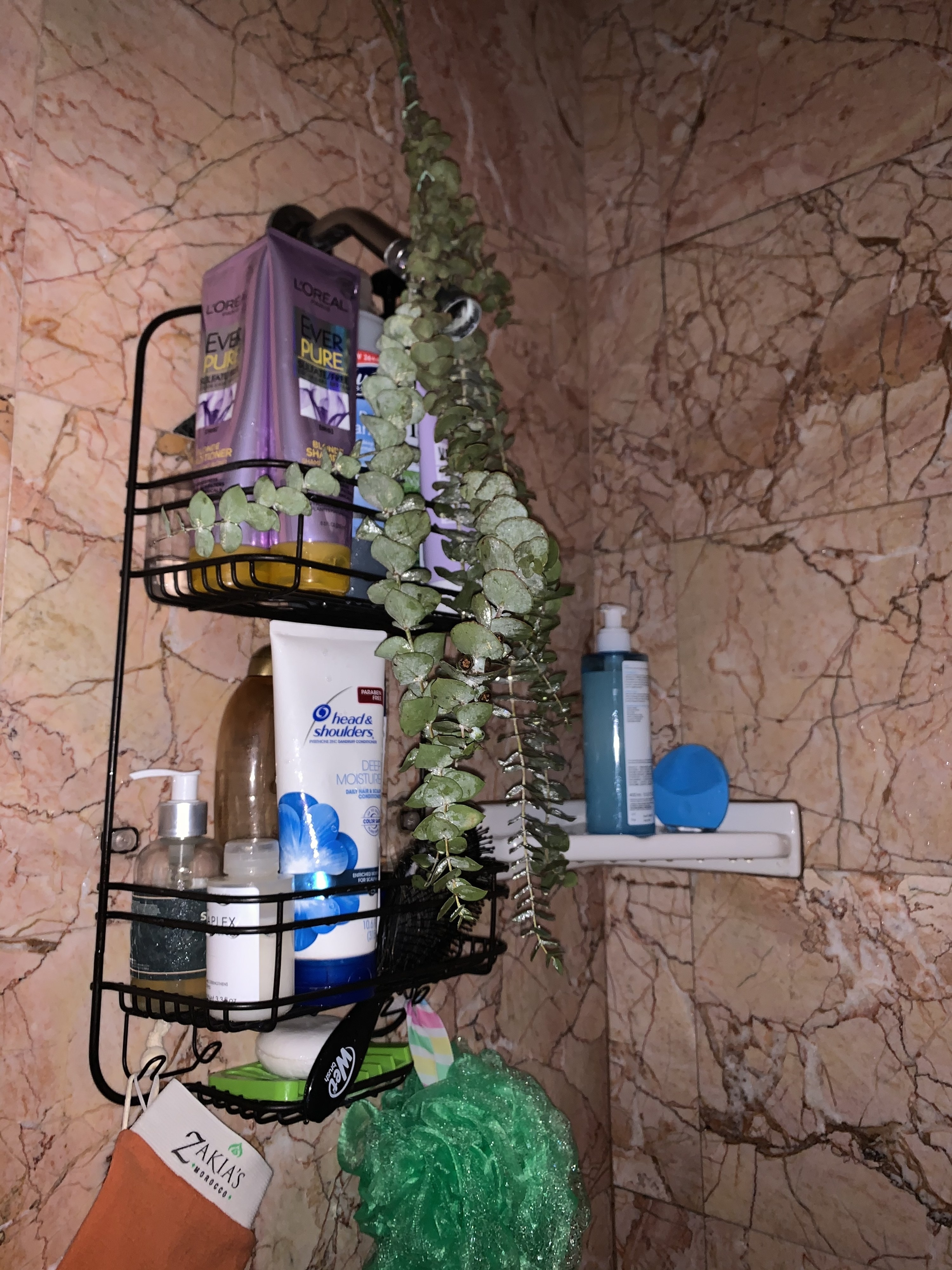 An image of a eucalyptus plant hanging from the author's shower head