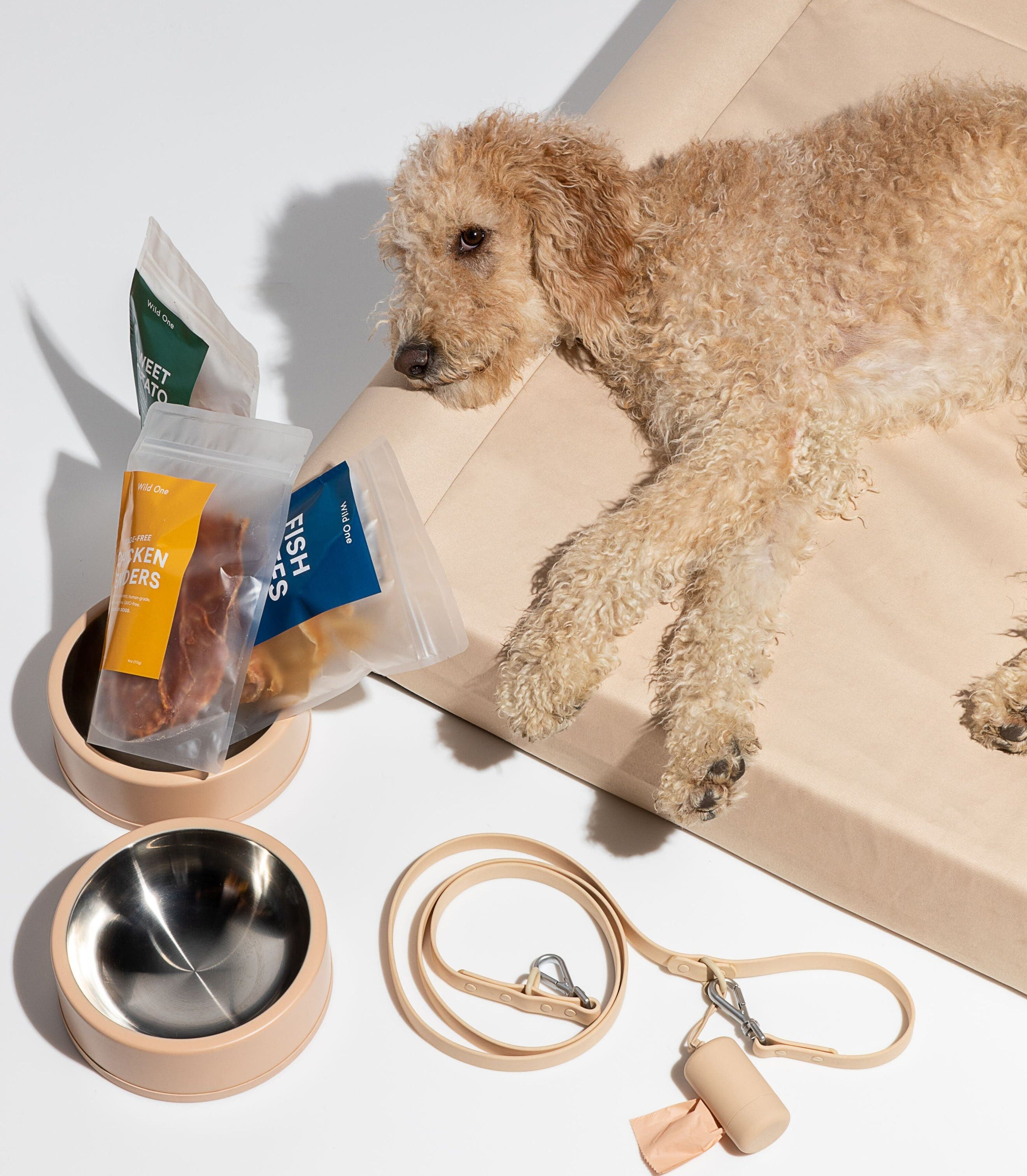 golden doodle on a dog bed lying next to dog bowls and other dog accessories