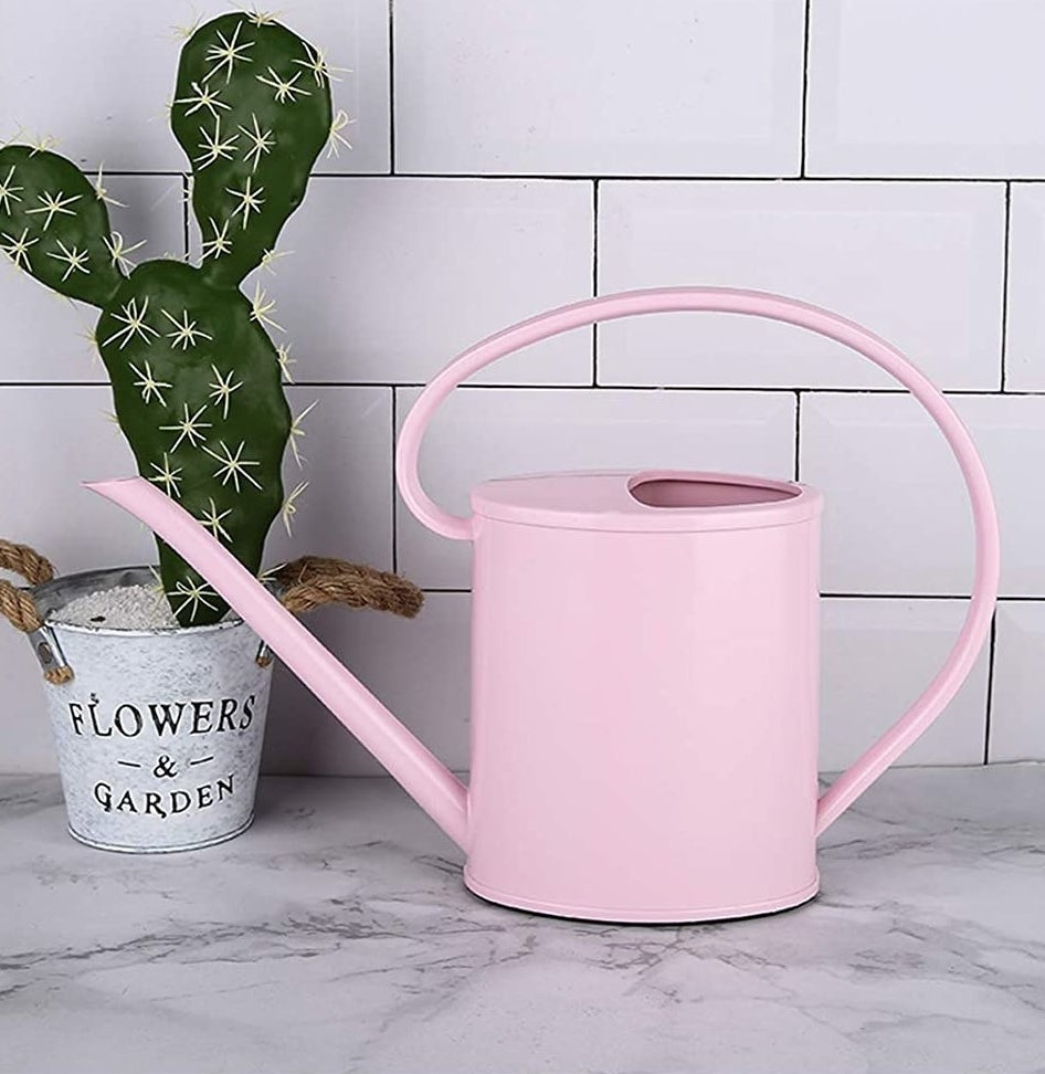 The watering can on a counter next to a cactus