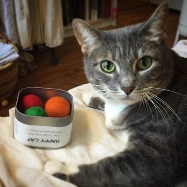 cat next to catnip balls