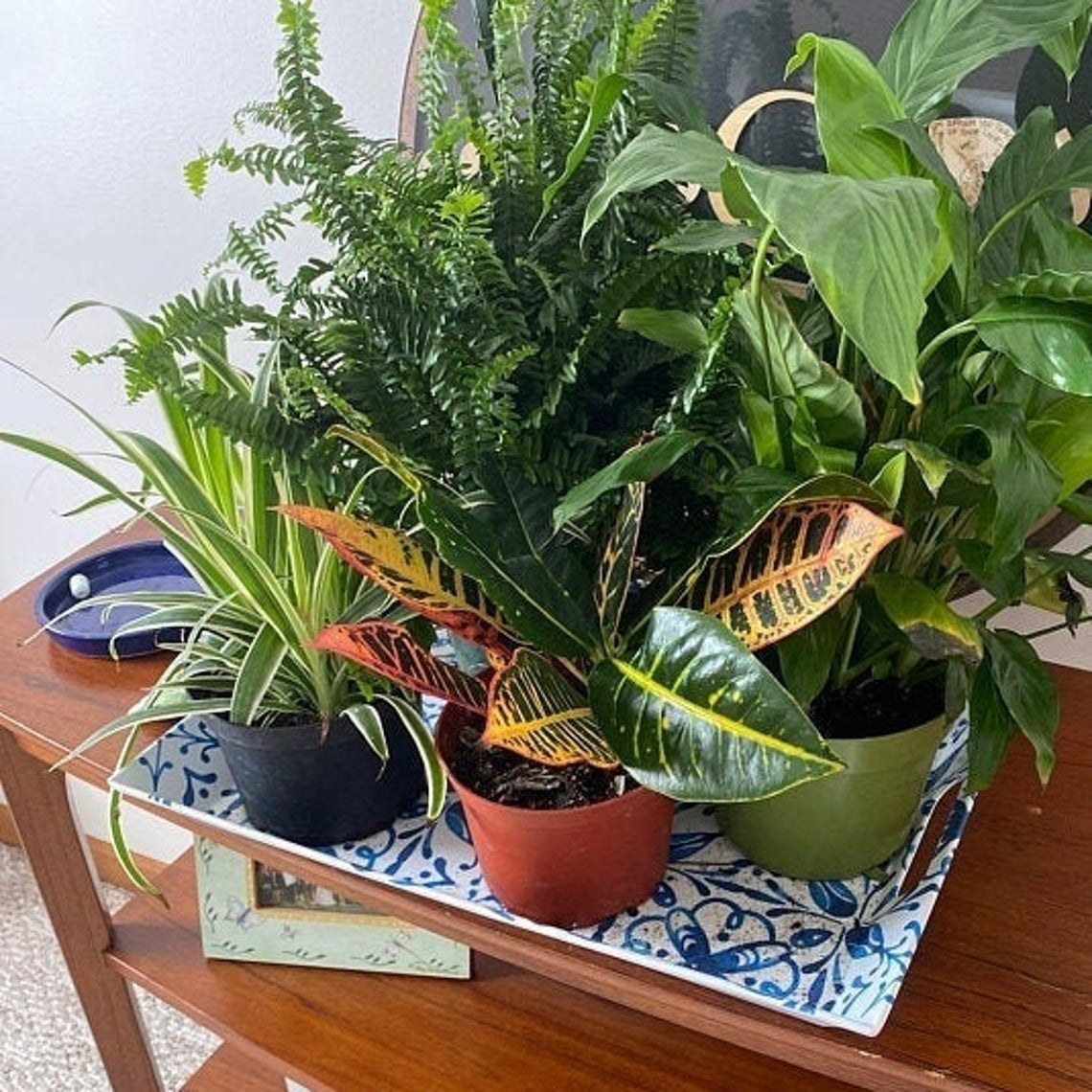 Four mid-sized plants on a table. Each with different leaves.