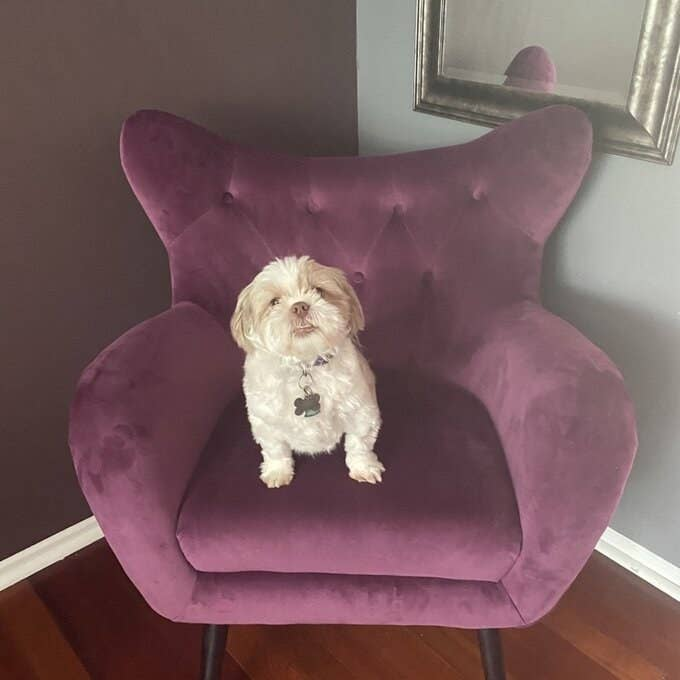 Reviewer's picture of the chair, which has solid armrests and splayed pin legs, in purple