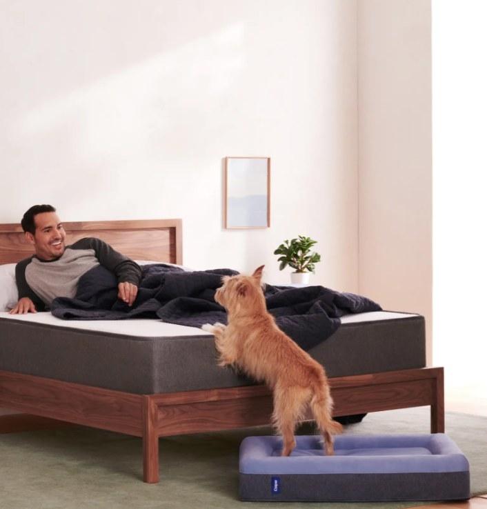 The Casper dog bed in blue