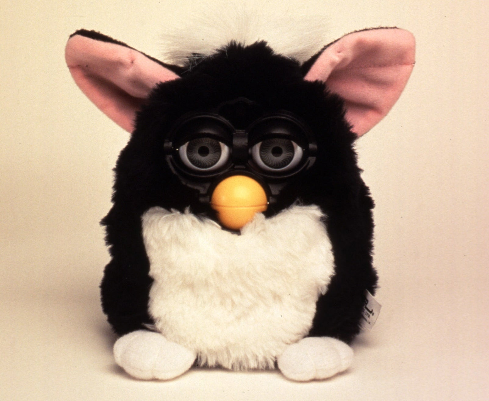 Photo of a black Furby