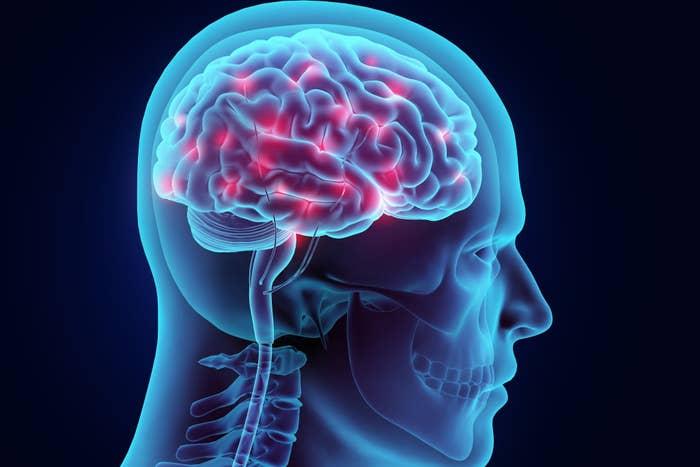 Brain in human drawing