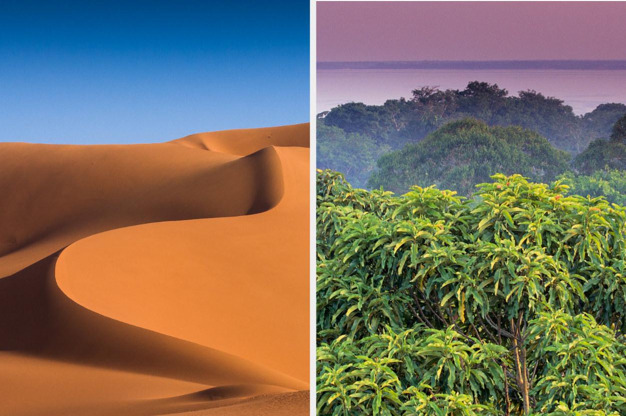 the sahara desert next to the amazon rainforest