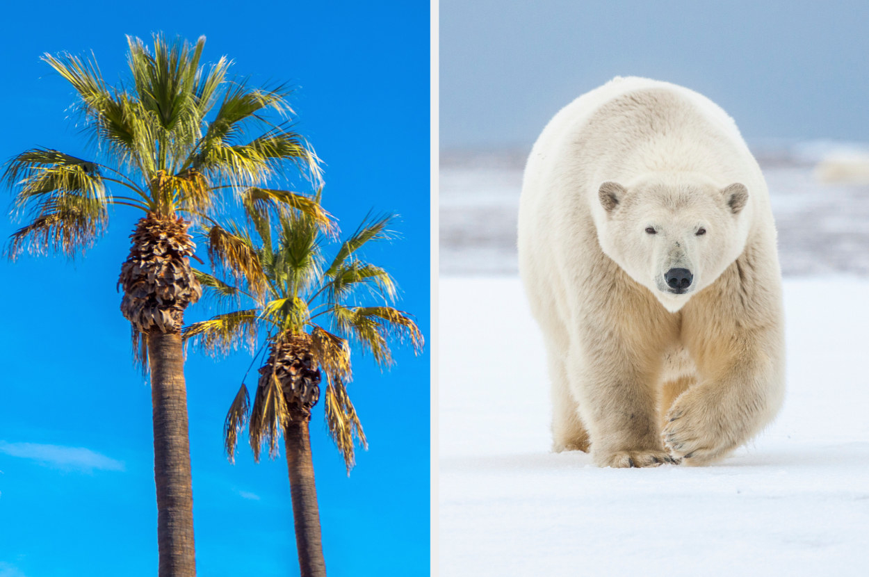 palm trees next to a polar bear