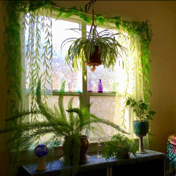 Room full of plants with sheer leafy curtains hanging from the window
