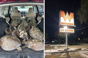 turtles in a truck and whataburger