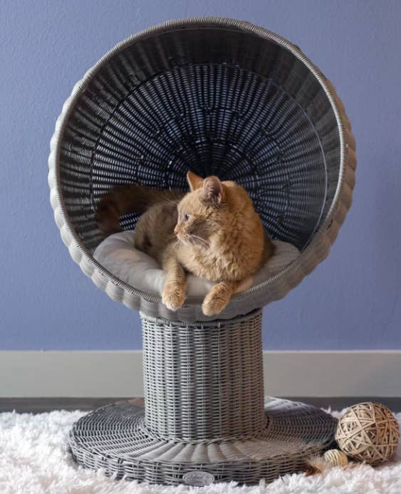 Cat inside raised circular cat bed made of rattan
