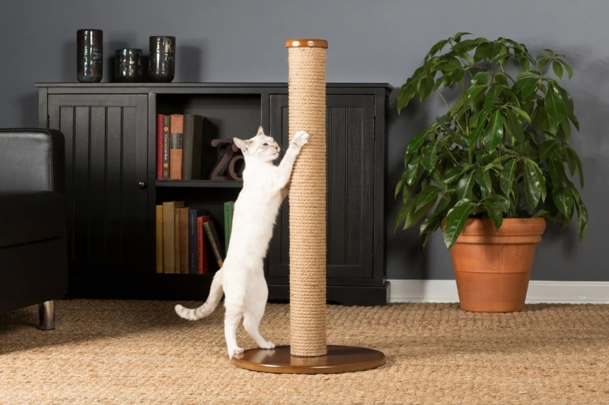 The tall cat scratching post with a brass base