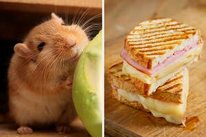 On the left, a smiling gerbil standing next to an apple, and on the right, a ham and cheese panini
