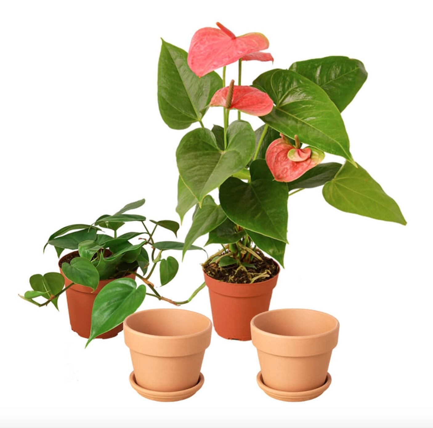 The plant gift bundle