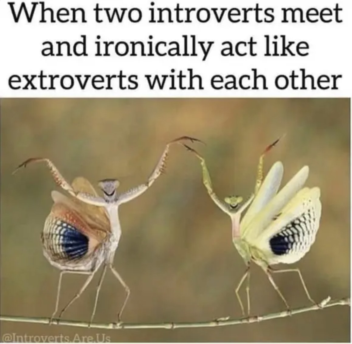 """Two colourful bugs on a stick under the words """"When two introverts meet and ironically act like extroverts with each other""""."""
