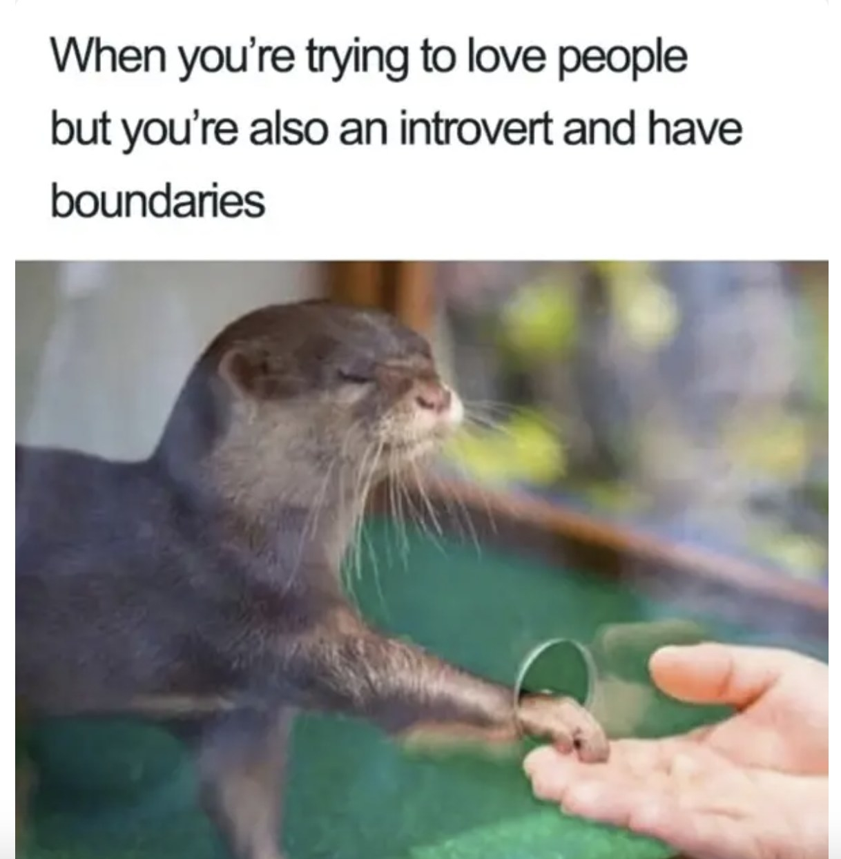 An otter behind glass putting its paw through a small hole to hold the hand of a human.