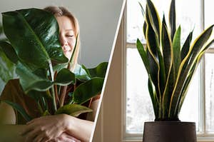 A woman is on the left holding a plant with a snake plant by the window on the right