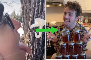 a tree tapped with a spout becomes jars of maple syrup