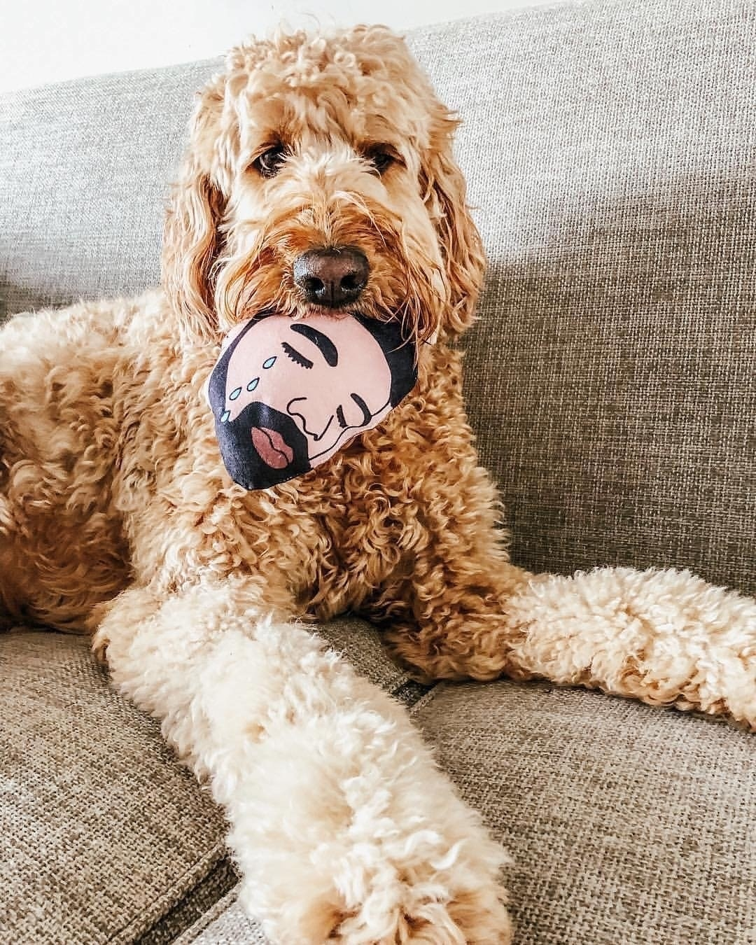 Fluffy dog with toy in its mouth