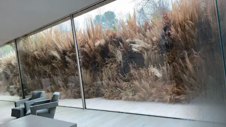floor-to-ceiling windows giving a glimpse of the dried trees