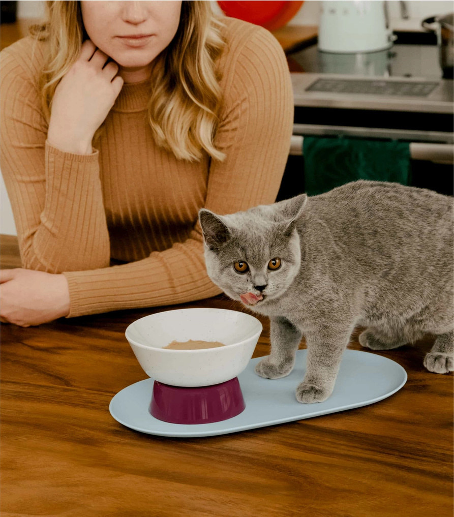 a grey cat eating from the raised white, purple, and blue bowl/tray setup