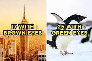 """On the left, the New York City skyline at sunrise labeled """"17 with brown eyes,"""" and on the right, a penguin flapping its wings in the snow labeled """"25 with green eyes"""""""