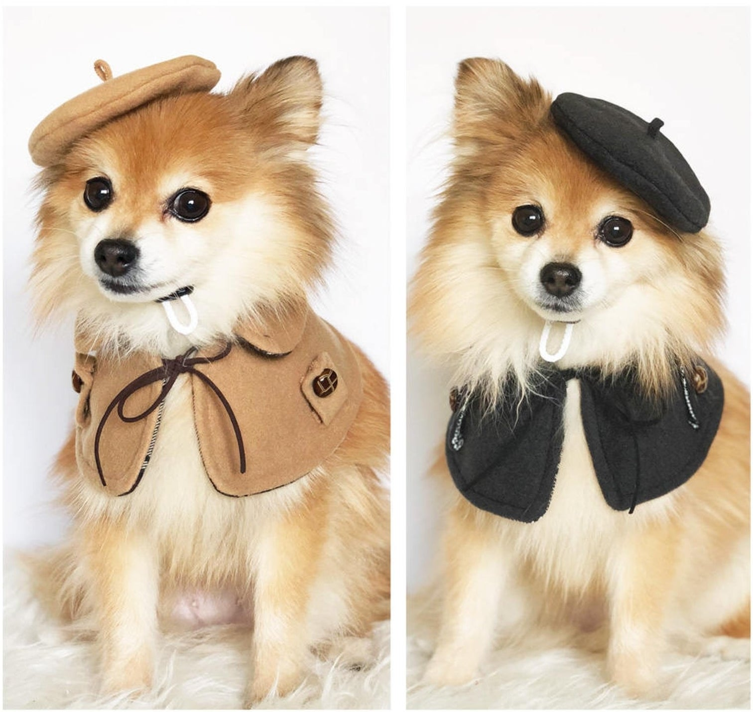 a small dog wearing a beret and cape in brown and black