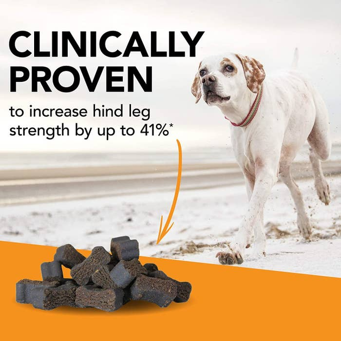 Infographic that shows the treats and says they're proven to increase hind leg strength by up yo 41%