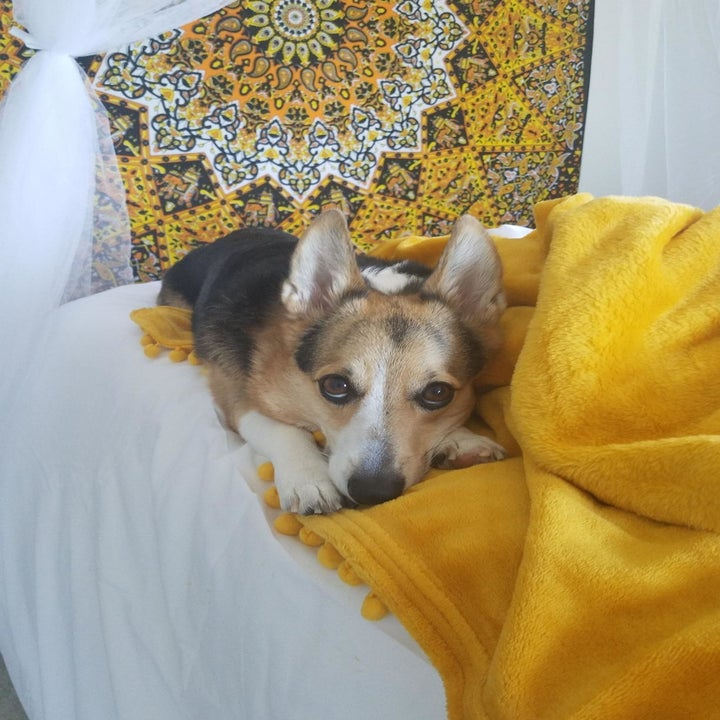 a reviewer's dog laying on the blanket in a mustard color