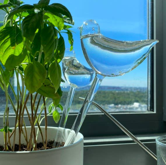 a reviewer photo of two glass, bird-shaped plant waterers in a plant on a windowsill
