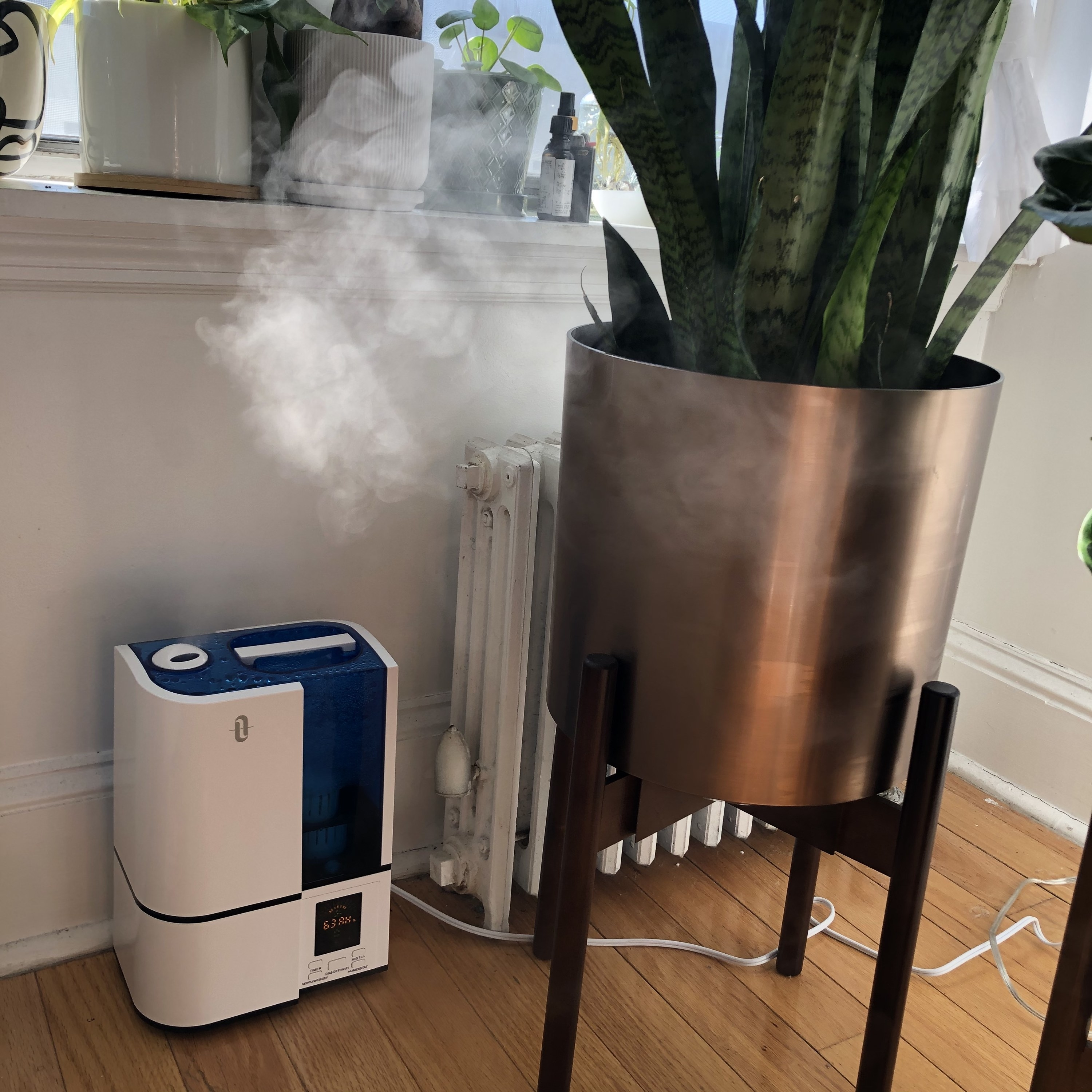 buzzfeed writer's  humidifier misting the air