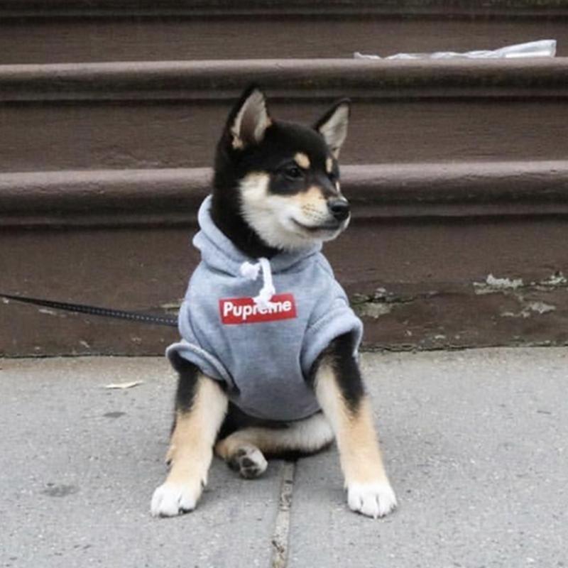 dog wears pupreme hoodie