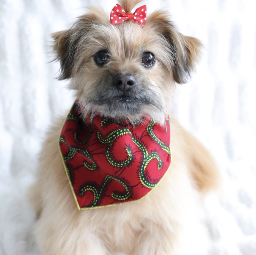 dog wearing red print bandana