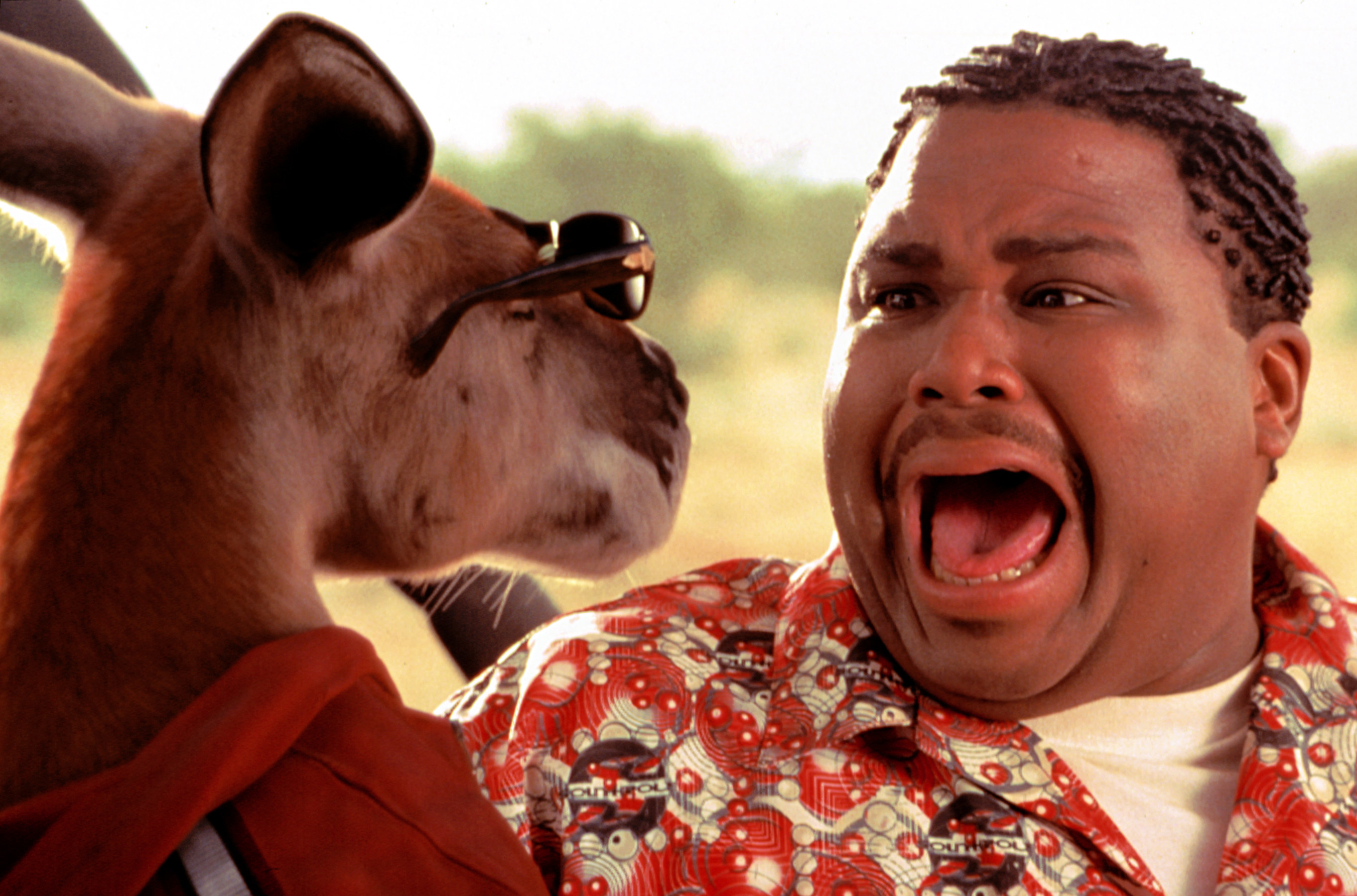 Anthony Anderson screaming when he sees Kangaroo Jack