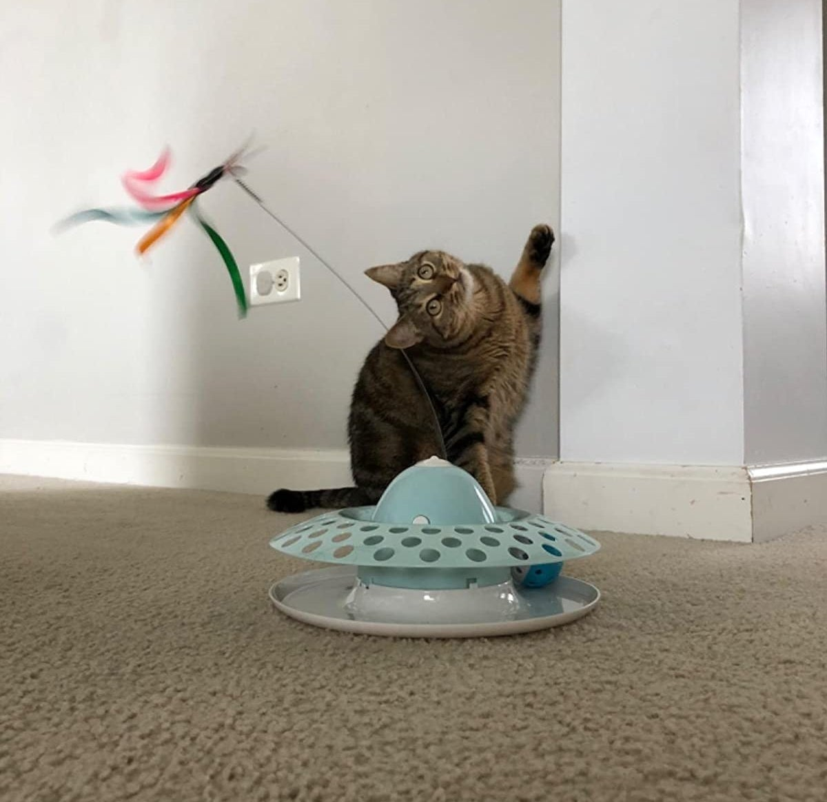 A cat playing with the cat toy